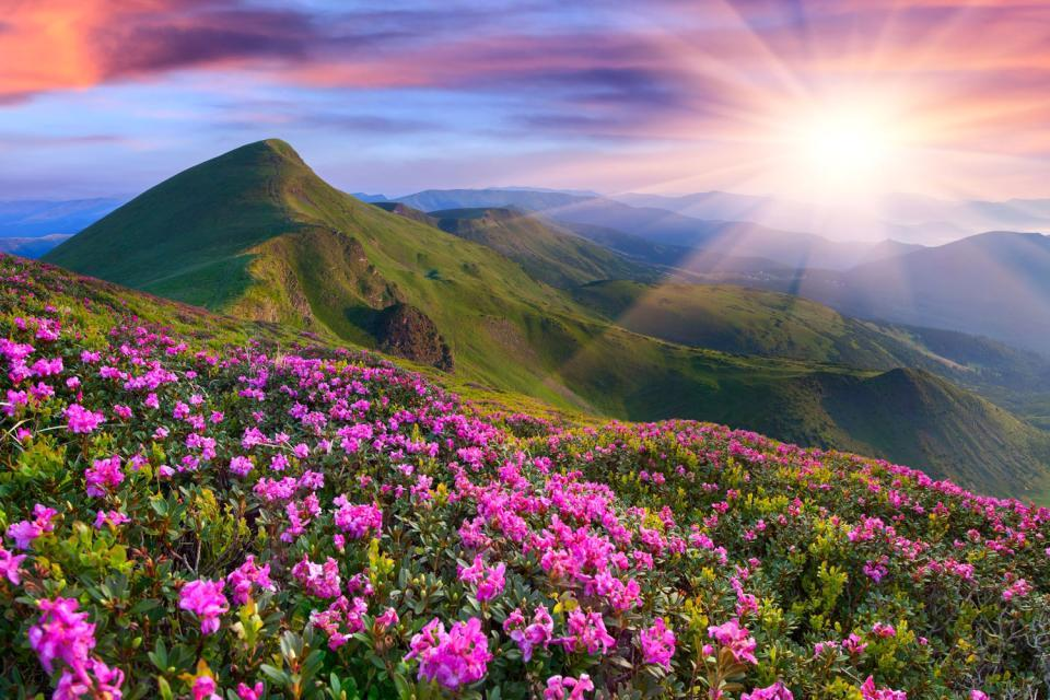 La flore andorrane , Les fleurs andorranes , Andorre