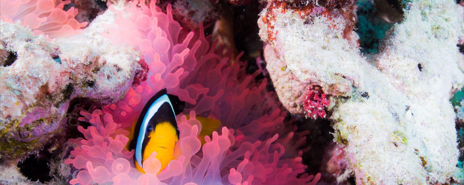 La plongée, Oman, oman dive center, plongée, faune, sous-marine, poisson, animal, mer