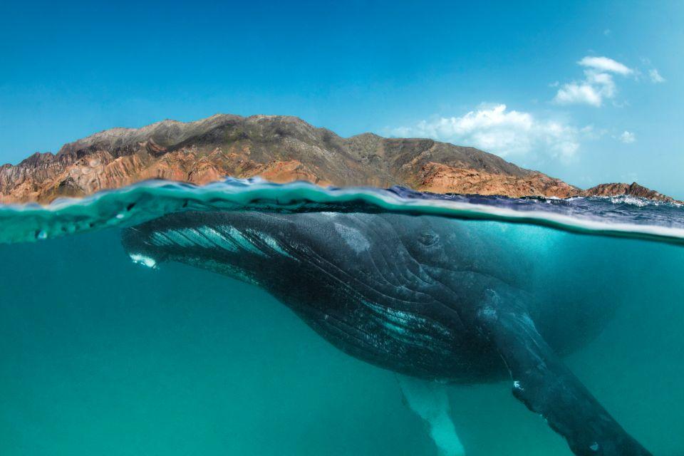 La plongée, Oman, oman dive center, plongée, faune, sous-marine, poisson, animal, mer, Khuriya Muriya, île