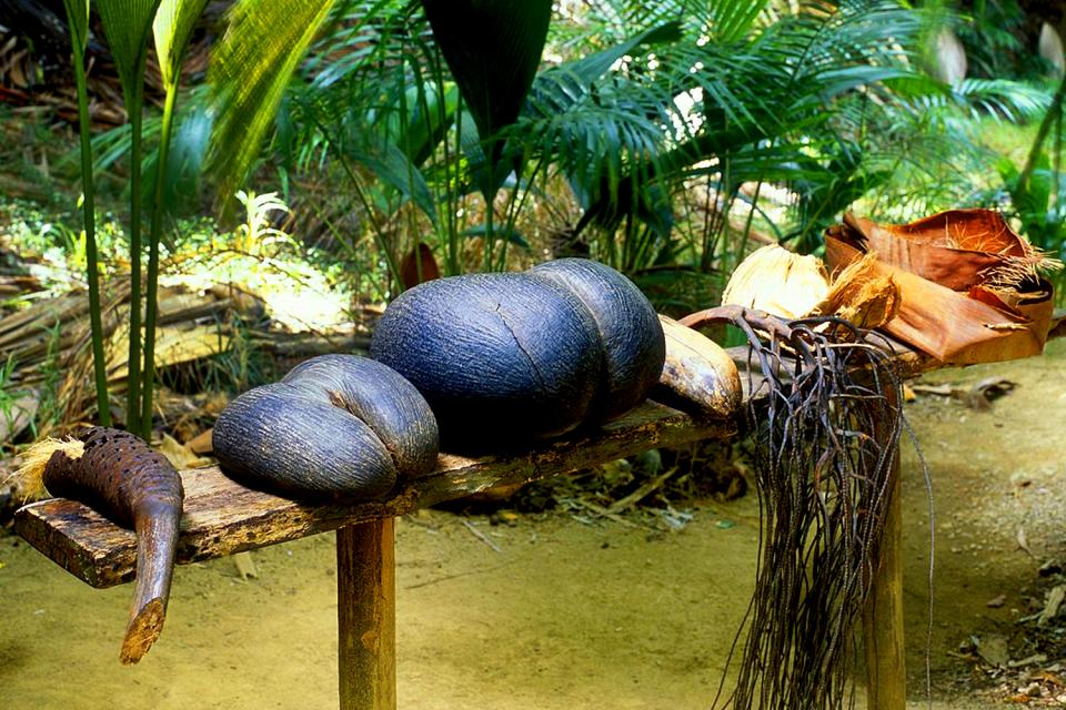 Le Coco de mer , Le coco de mer , Seychelles