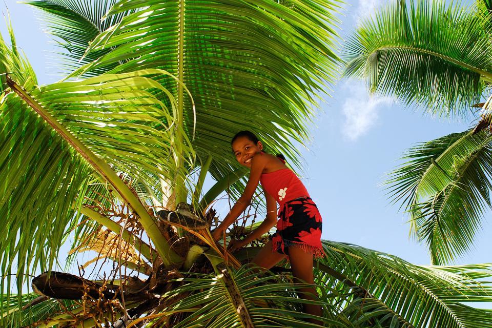 Le Coco de mer , Les Seychellois sont fiers de leur coco fesse , Seychelles