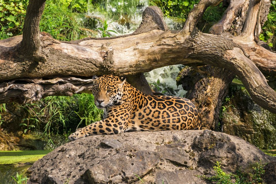 Guyana zoo in Macouria, Guyana Zoo, Excursions, Guiana