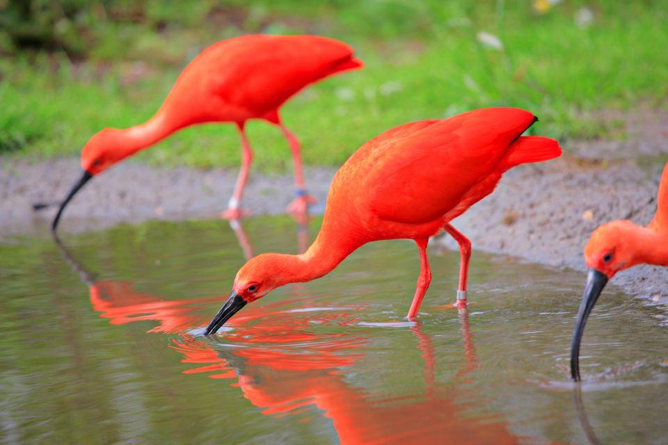 Guyana Zoo, Excursions, Guiana