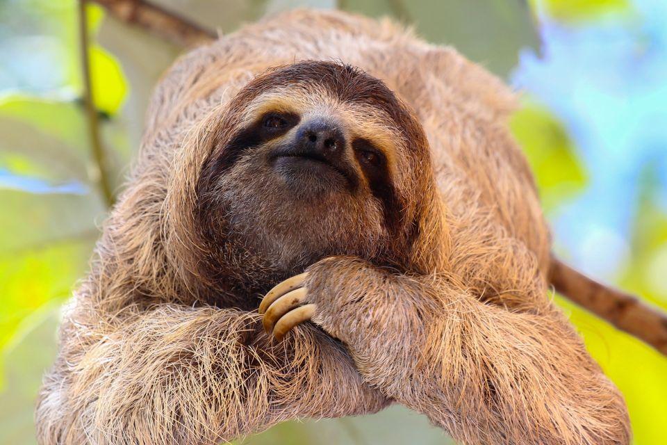 , Guyana Zoo, Excursions, Guiana