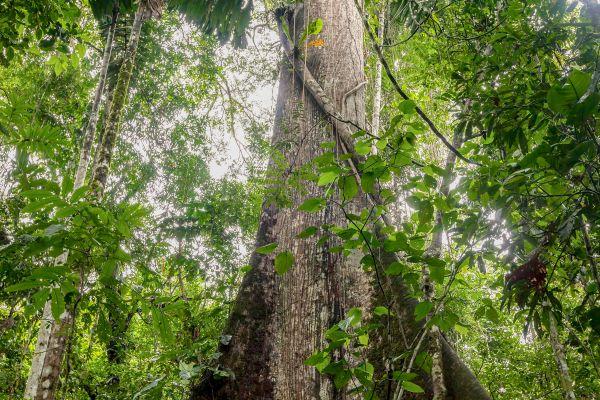 , El Monte Gran Matoury, Los parques y las reservas naturales, Guyana Francesa