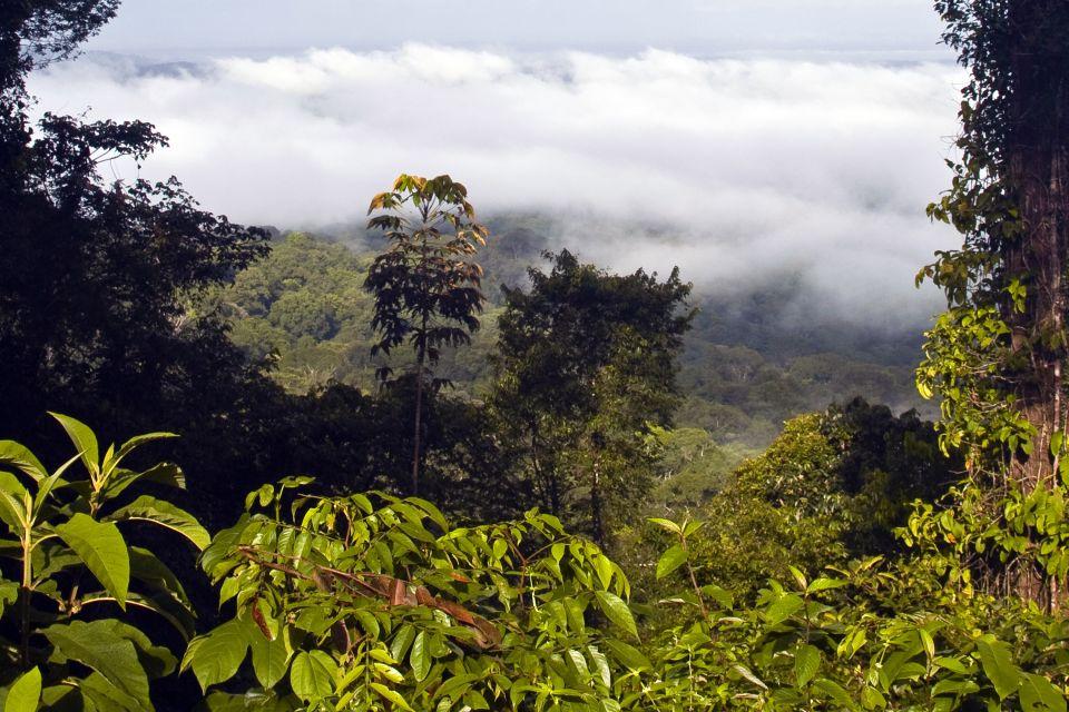 La reserva nacional del Monte Grand Matoury, El Monte Gran Matoury, Los parques y las reservas naturales, Guyana Francesa