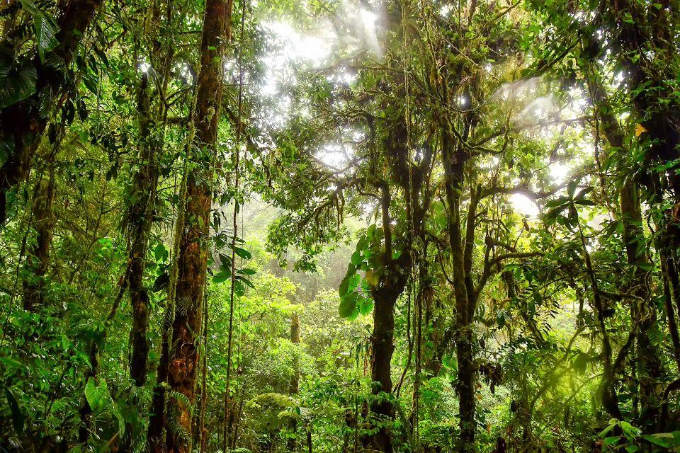 Les parcs et les réserves, guyane, europe, france, parc, régional, flore, végétation