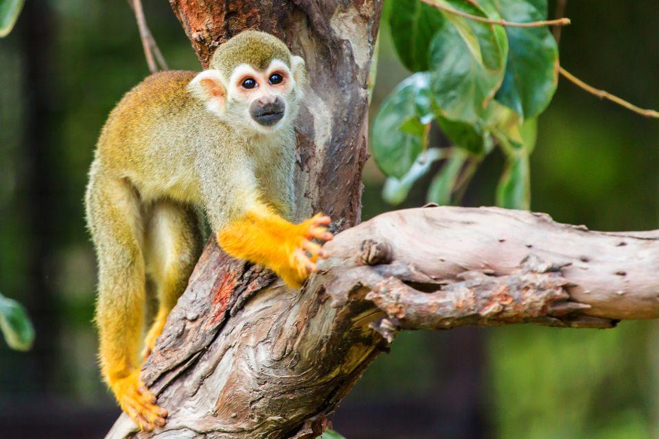 Les parcs et les réserves, guyane, europe, france, parc, régional, singe, ecureuil, mammifere, animal, faune