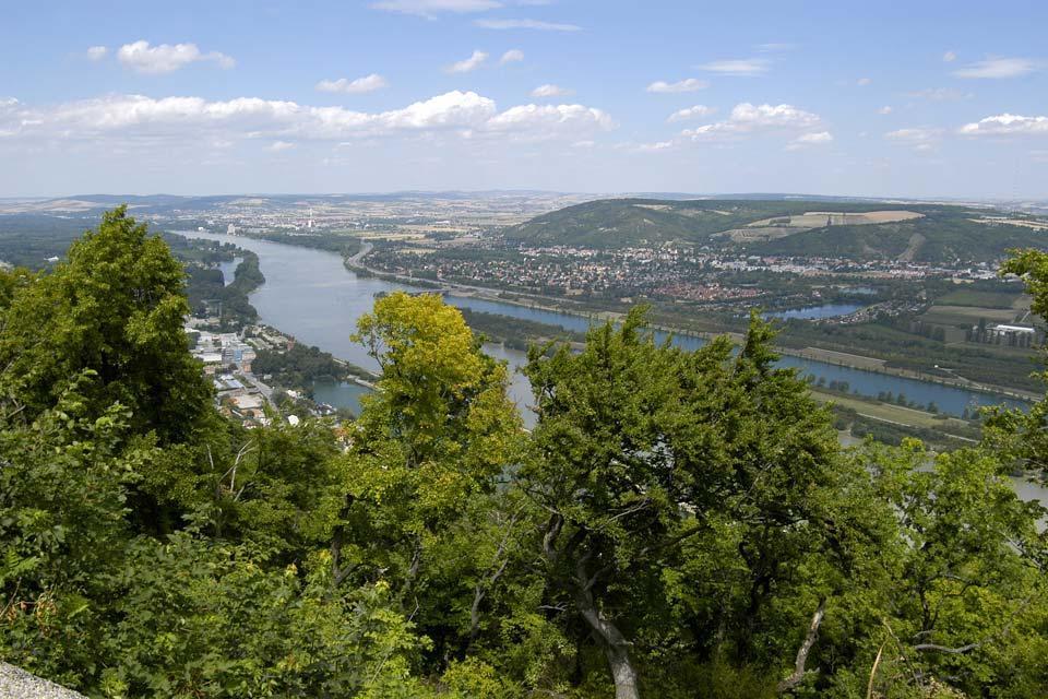 La forêt viennoise , Le Danube , Autriche