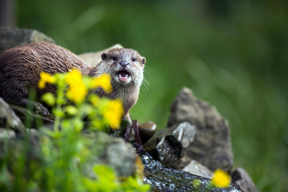 Rapaces y otras faunas de Saja-Besaya , España