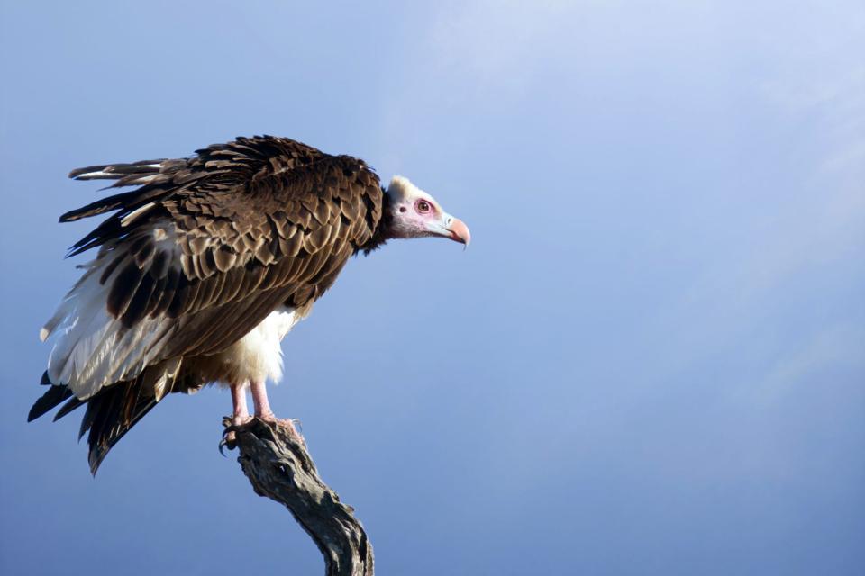 Birds of prey and other animals in Saja-Besaya , Spain
