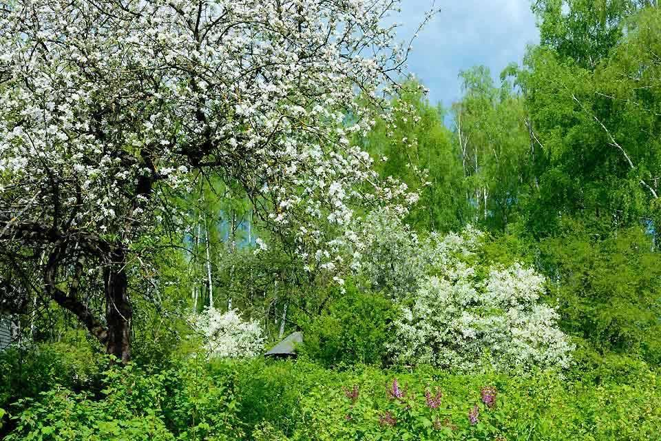 La flora , Bielorrusia