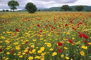 Parc national de Cabañeros , Espagne