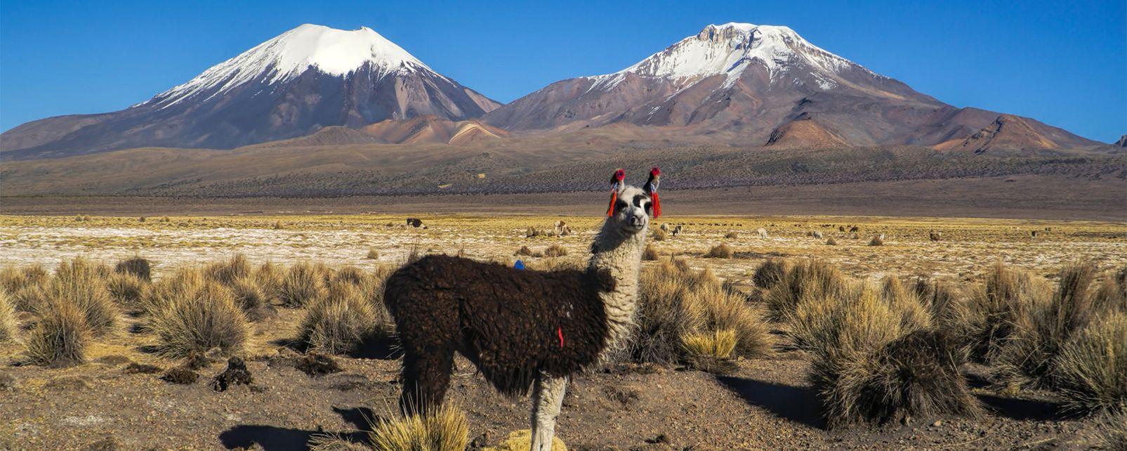 The Andean Cordillera , Bolivia
