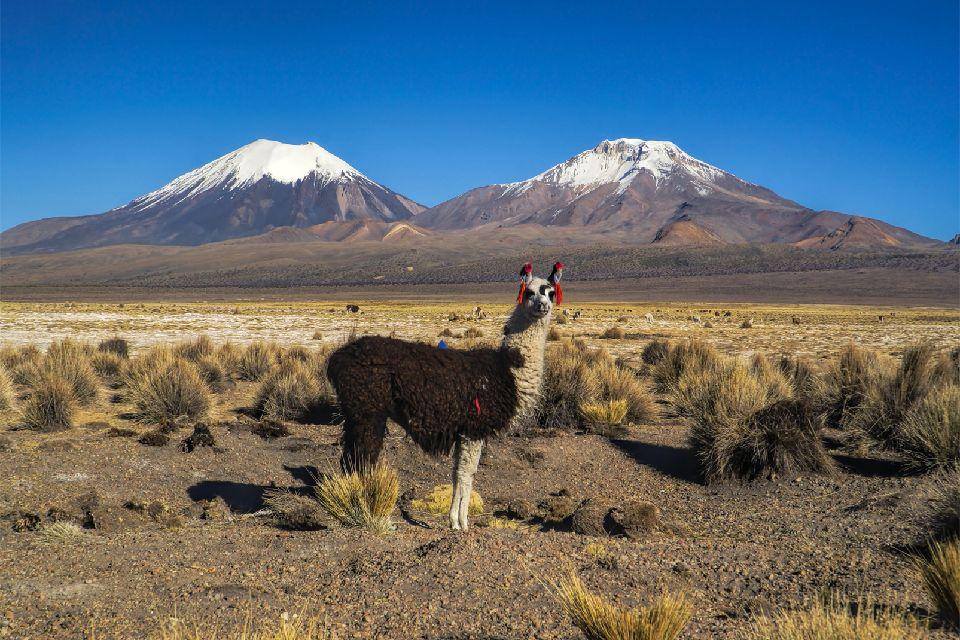 La cordillère des Andes , Le Cerro Torre , Bolivie