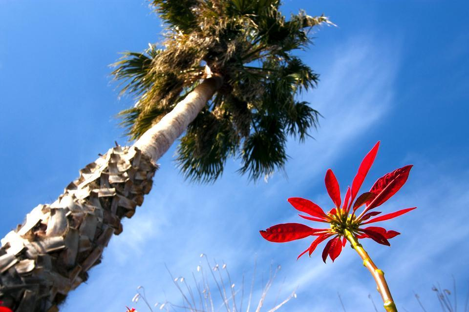 La Flora , Vista del relieve , España
