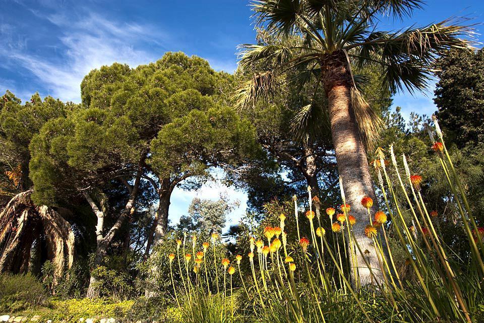 La Flora , España