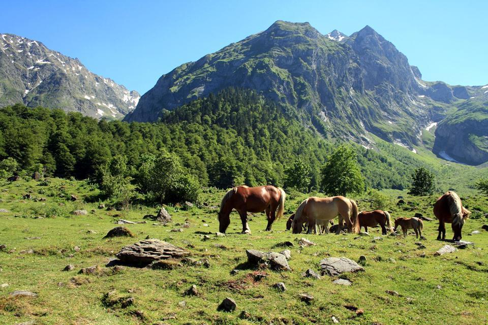 Fauna of the Pyrenees , Spain