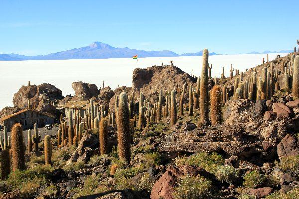 Le Salar de Uyuni , L'île de corail d'Incahuasi , Bolivie