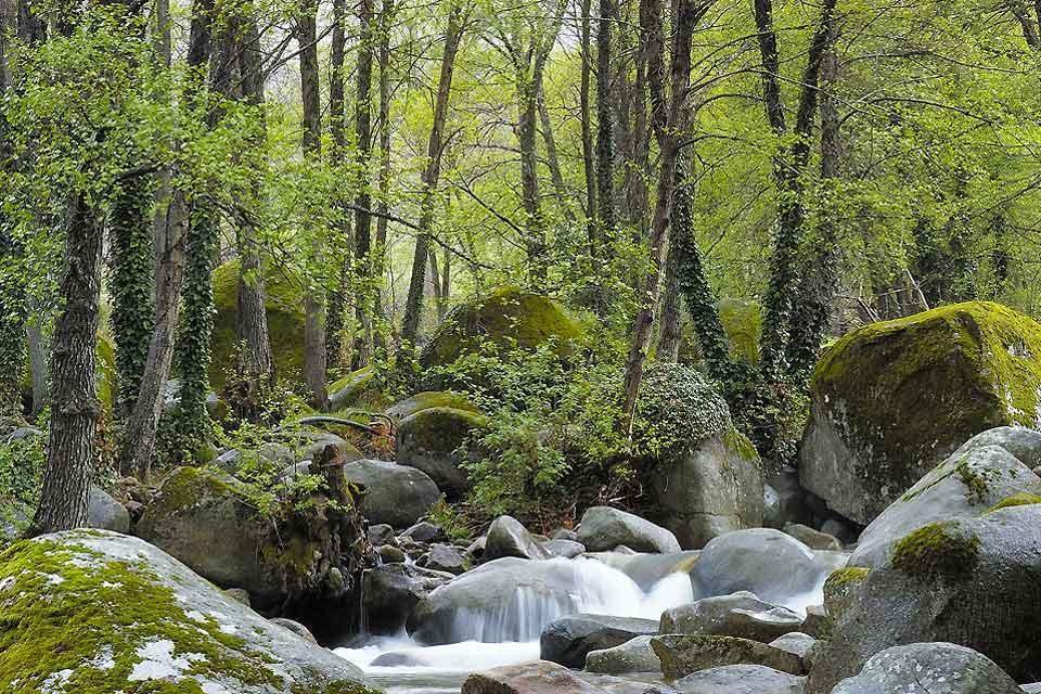 Reserva Natural de la Garganta de los Infiernos , España