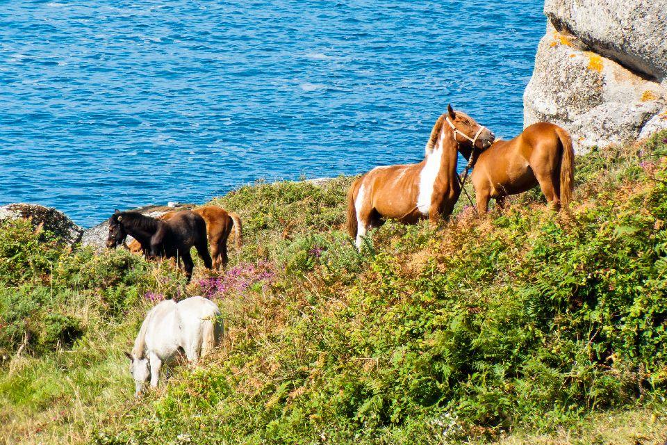 Curro das bestas , España