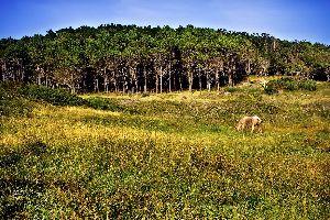 Les forêts millénaires , Mille ans de forêts, la Galice , Espagne