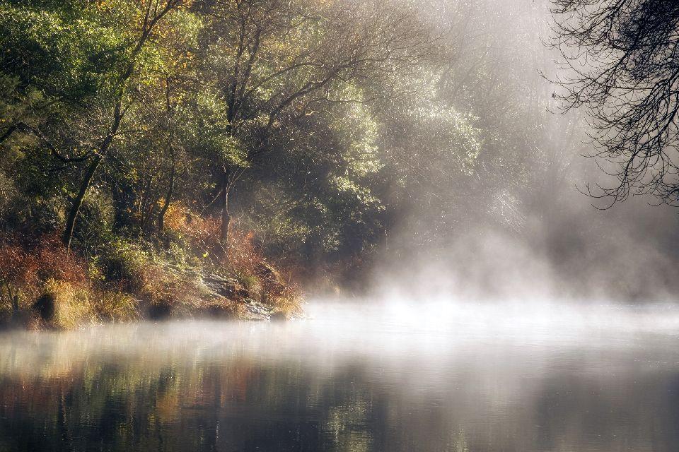 Los Bosques milenarios , España
