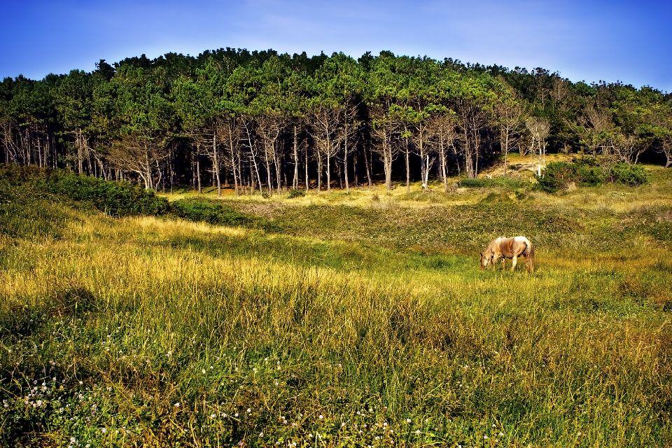 Die tausendjährigen Wälder , Tausendjähriger Wald, Galizien , Spanien