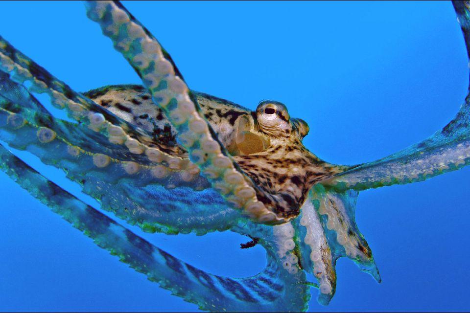 La rica fauna submarina , España