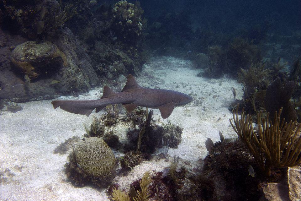 L'abondante faune sous-marine , Espagne