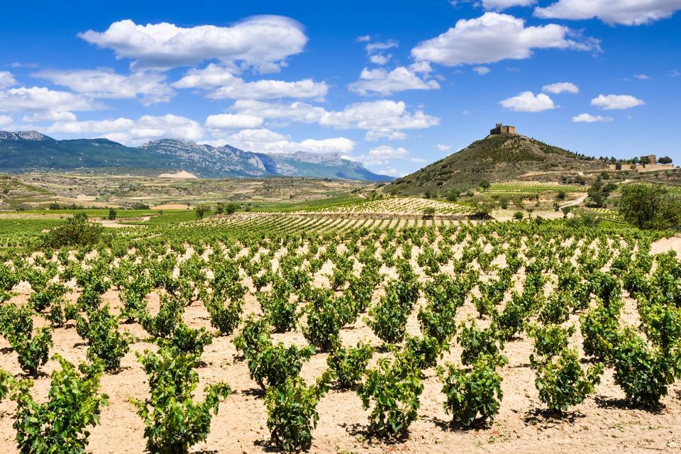 Les étendues agricoles et viticoles , Espagne