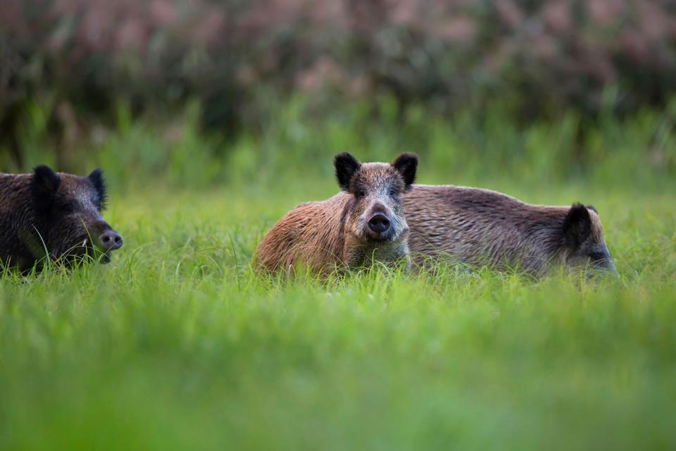 Cicogne e altre specie animali di Sotos del Ebro , Spagna
