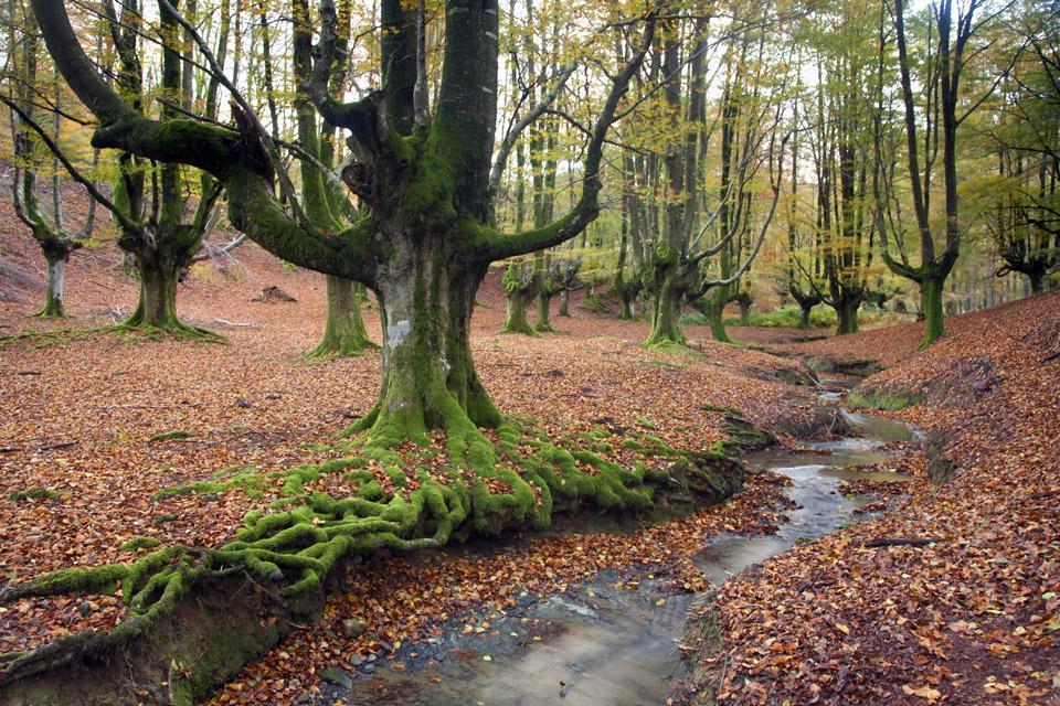 El bosque encantado , El bosque encantador , España