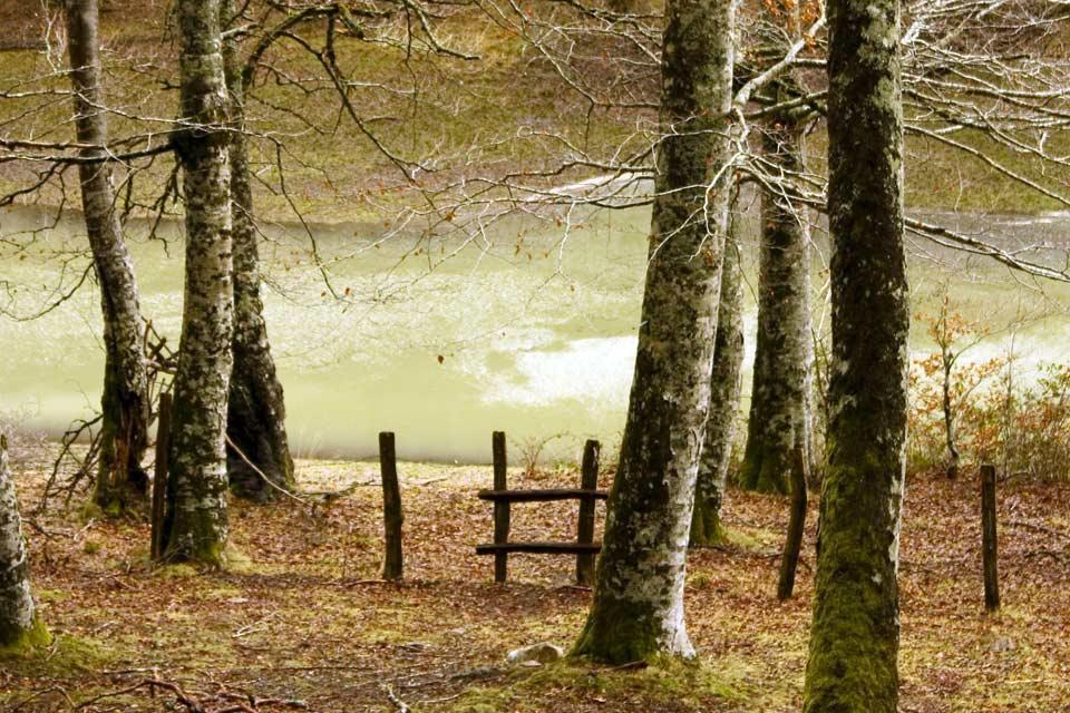 El bosque encantado , España