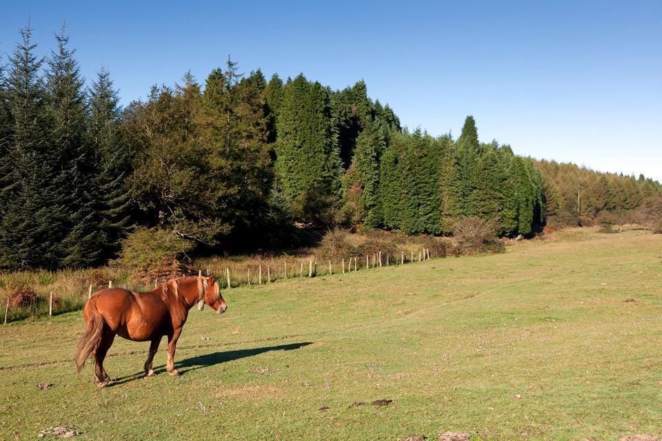 Montañas del País Vasco , España