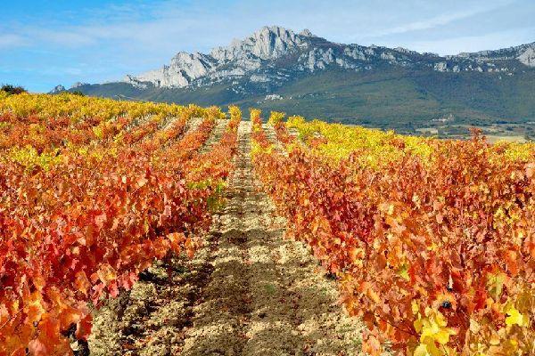 Rioja Alavesa , Espagne