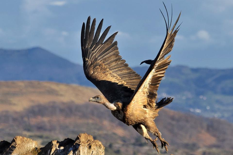 Parque natural de Aralar , España