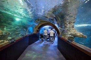 Aquarium de San Sebastián , Espagne