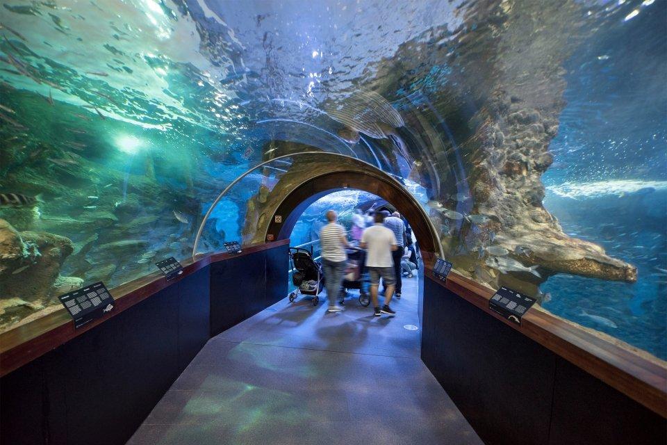 Morena común (Muraena helena), Aquarium de San Sebastián, Arte y cultura, País Vasco
