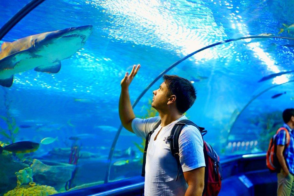 Aquarium de San Sebastián, Arte y cultura, País Vasco