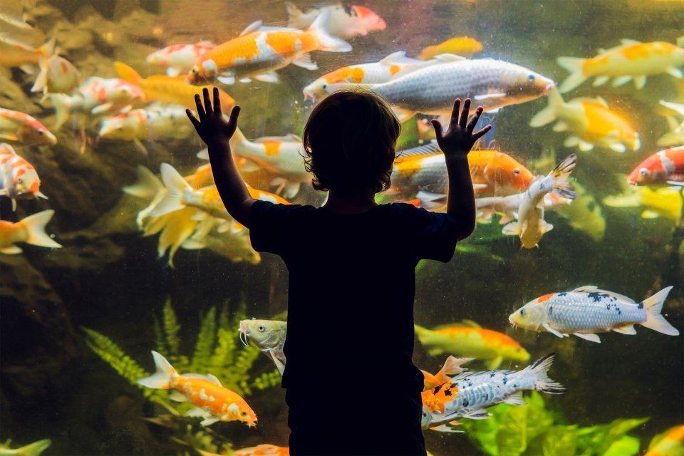 , Aquarium de San Sebastián, Arte y cultura, País Vasco