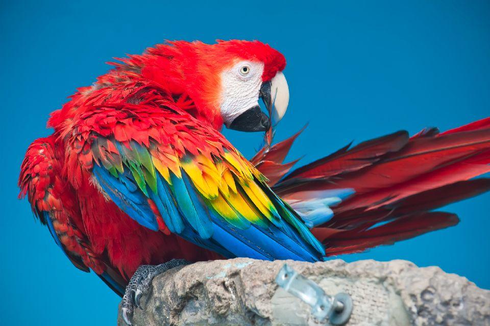 The Amboro Amazonian park , Bolivia