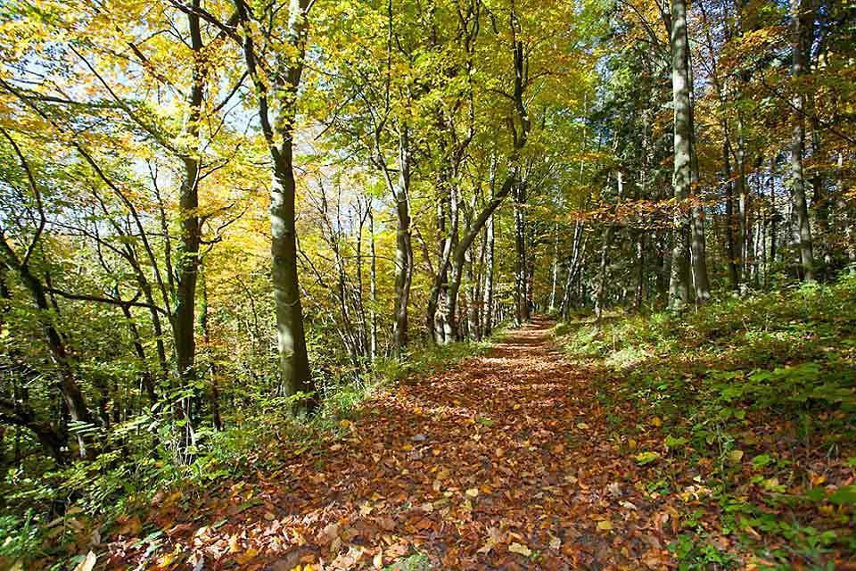 La faune et la flore des sierras , Un écosystème particulier , Espagne