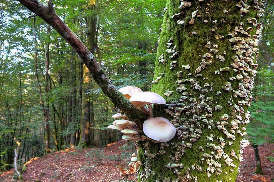 La faune et la flore des sierras , La saison des champignons , Espagne
