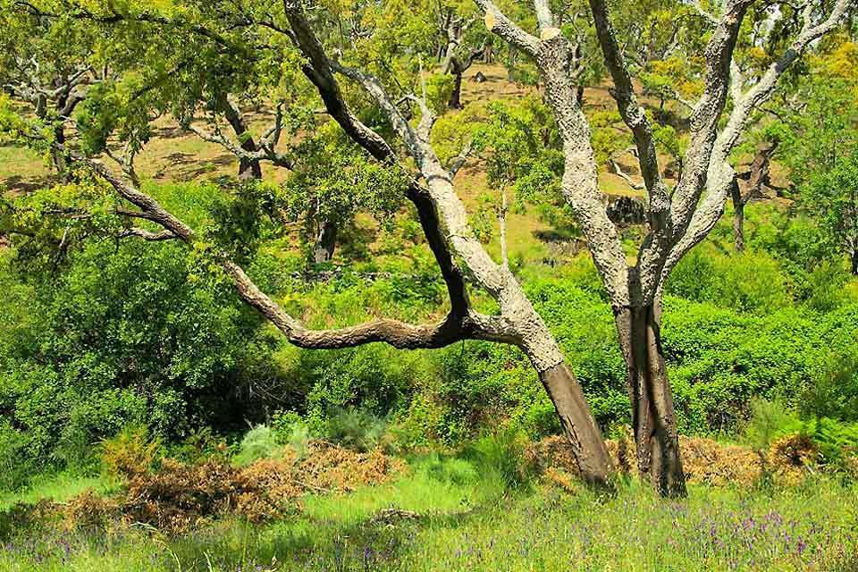 Fauna und Flora der Sierras , Spanien