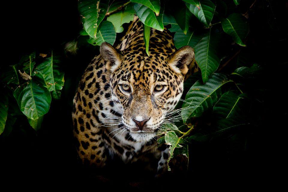 Les parcs amazoniens du Pantanal , Grenouille , Bolivie