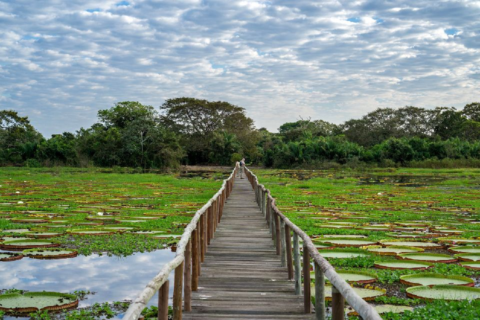 Les parcs amazoniens du Pantanal , Couple de perroquets , Bolivie