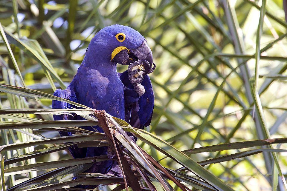 The Pantanal Amazonian parks , Bolivia