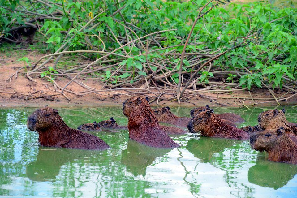 Les parcs amazoniens du Pantanal , Parc du Pantanal , Bolivie