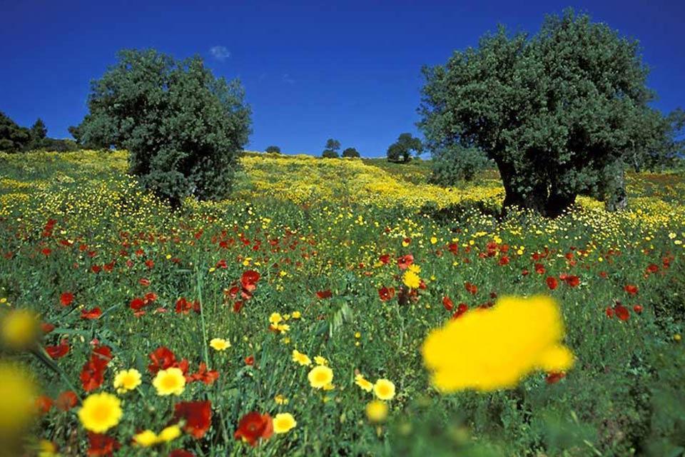 Pollino , La flore du Pollino , Italie